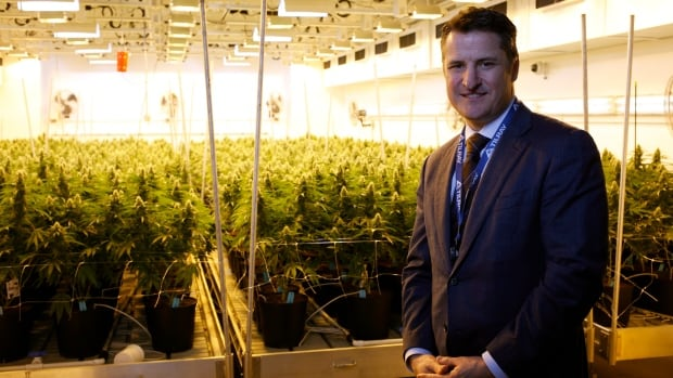 Cannabis producer Tilray doubles revenue but deepens losses in 2018