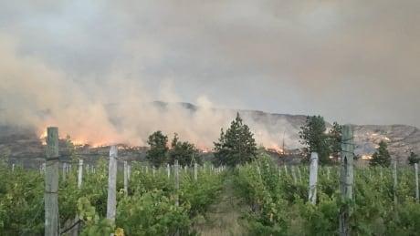 Okanagan vineyard near wildfire