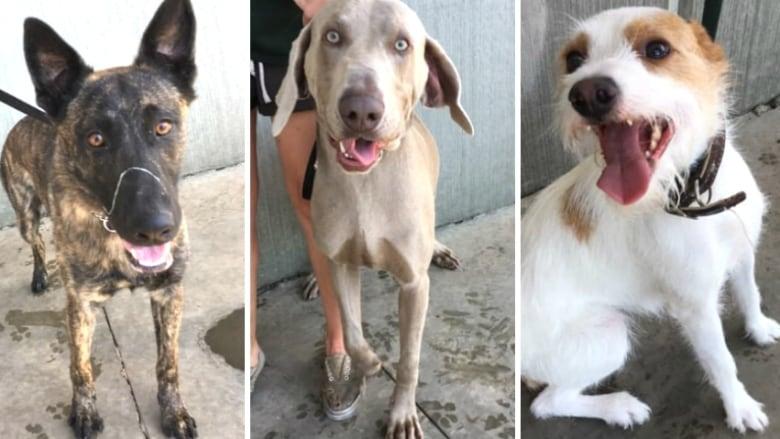 dogs-rescued-motel.jpg