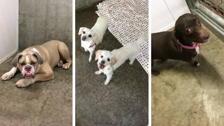 Woman charged after 8 distressed dogs rescued from Alberta