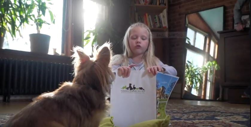 Toronto Humane Society Children S Reading Program Goes To The Dogs