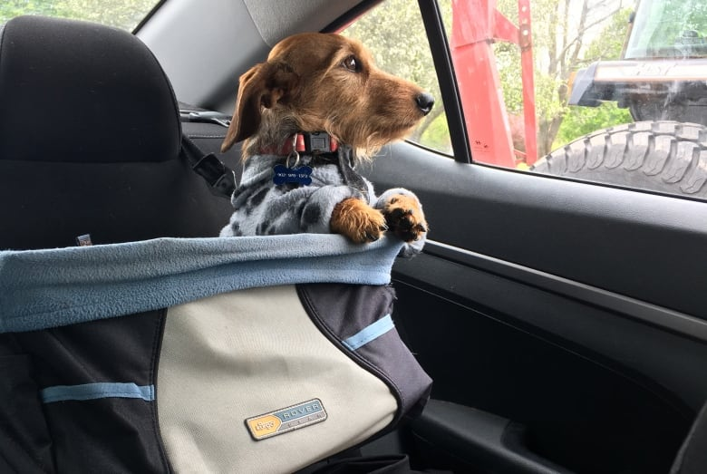 Parker Says Doggy Car Seats Can Be Purchased At Pet Stores Or Online After Her Close Call She Shell Never Let Moe Ride In The Without One
