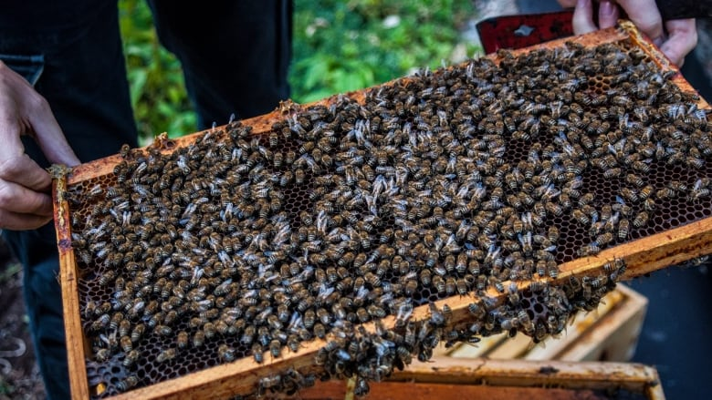Is Bee Farming Profitable?
