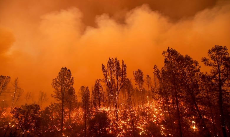 Carr Fire more than doubles in size near Redding, California