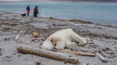 Norway-Polar Bear Attack