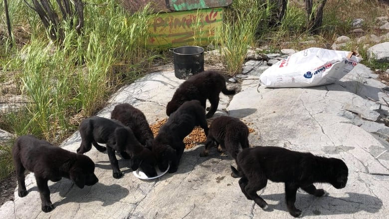 Gilligans Island Crew Of Puppies Rescued From Uninhabited