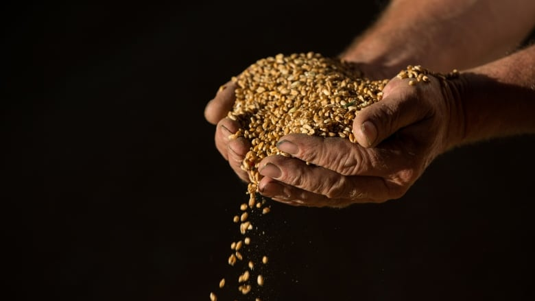 Why boycotting Canadian wheat is likely to backfire for Saudi Arabia