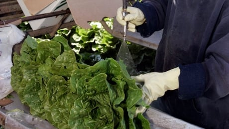 Salad Safety