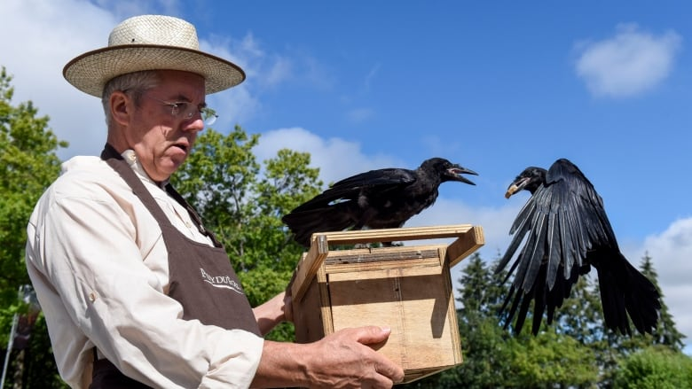 184276eaf9 French theme park trains crows to pick up trash