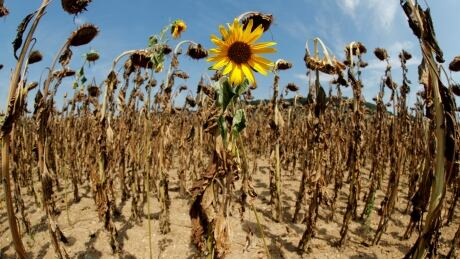 Global warming 'pause' about to end, raise Earth's temperatures further