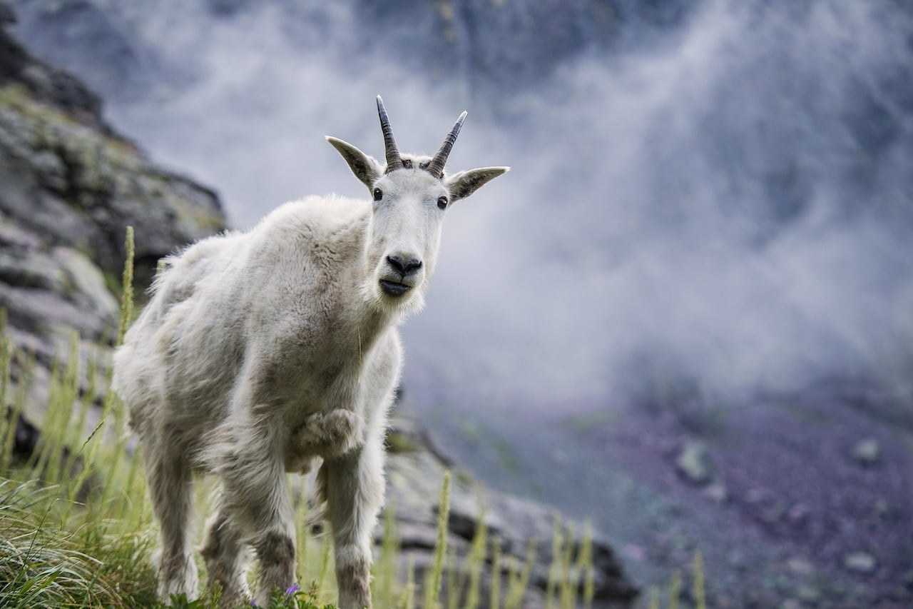 Tracking animals from space could provide early warning of natural