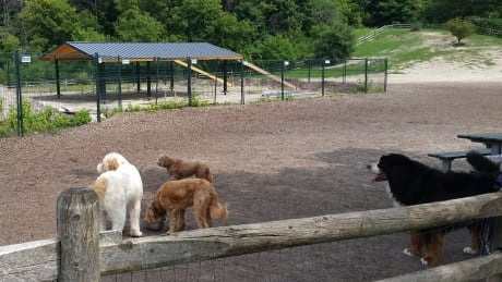 Shade structure in Cedarvale Park off-leash dog area