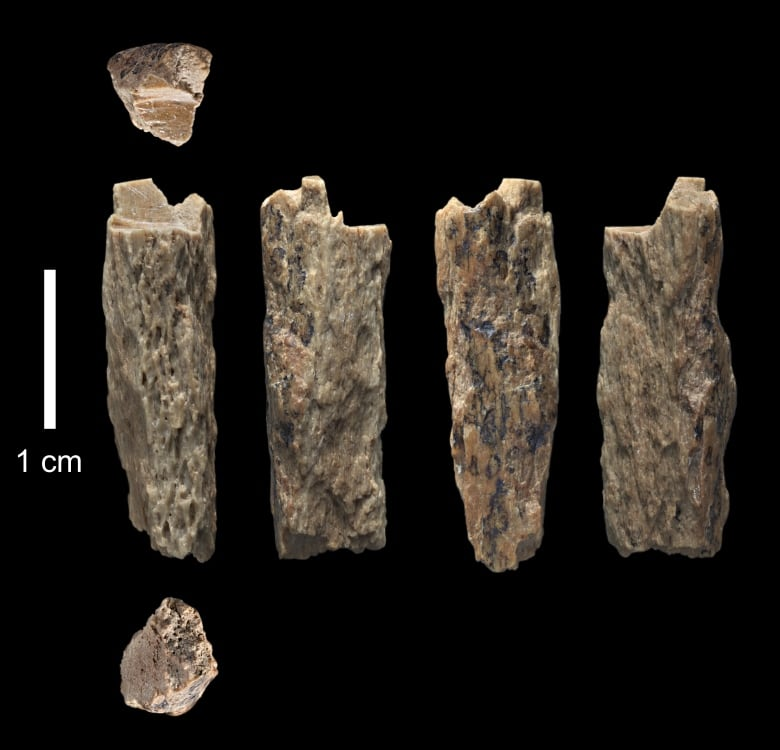 Ancient remains show early human interbreeding