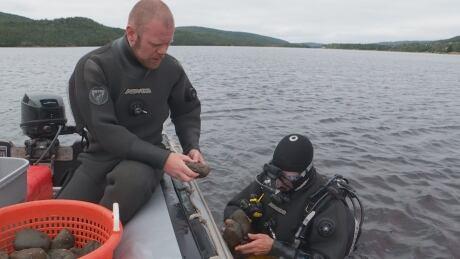 Eelgrass divers