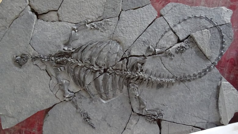 Scientists Discover 230-Million-Year-Old Turtle That Had No Shell