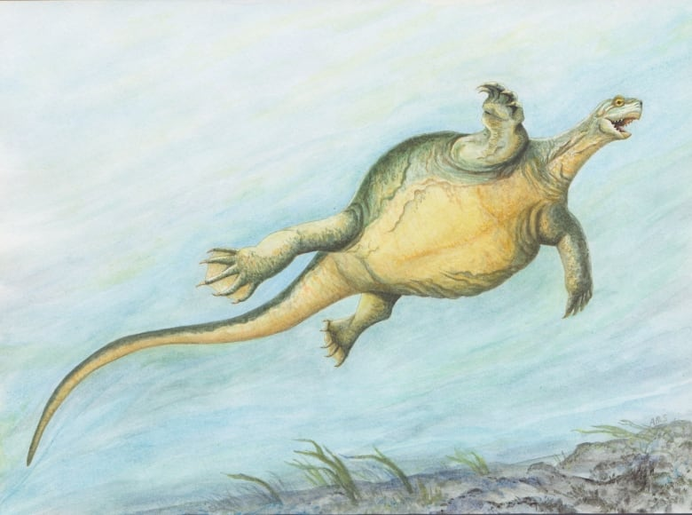 Recently discovered turtle fossil challenges theories on origins
