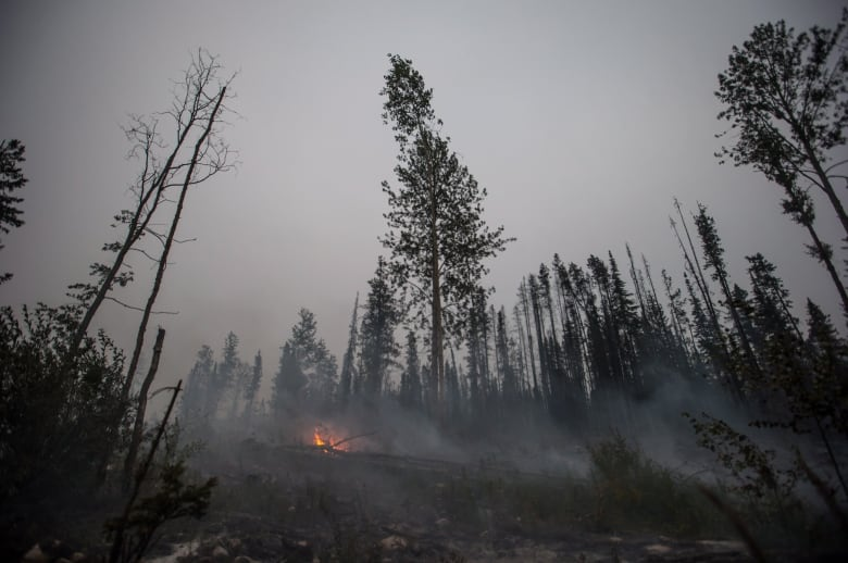 Can government incentives to private companies help solve B.C.'s wildfire crisis?