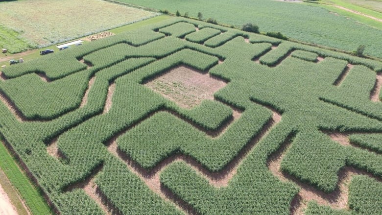 p e i s amazing corn mazes and where to find them cbc news