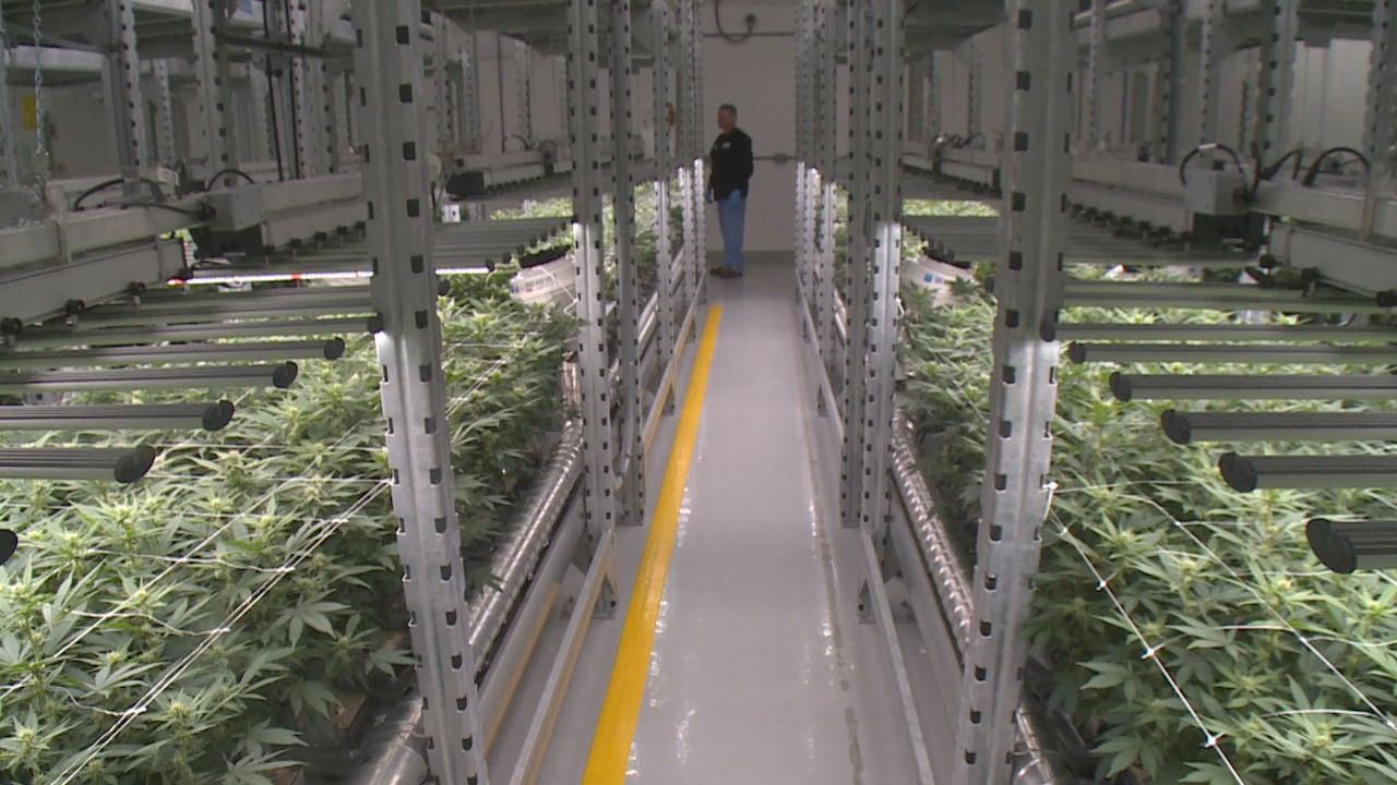 AgMedica touts 'world class' cannabis cultivation facility