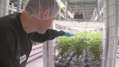 B.C. solicitor general concerned cannabis workers may face difficulties crossing U.S. border