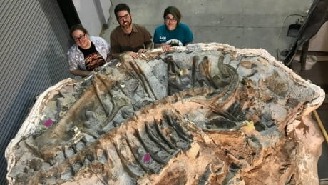 get a sneak preview of a beautifully preserved mummified dinosaur named zuul
