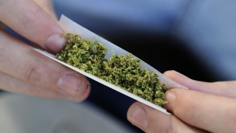 Marijuana rolling a joint