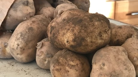 Alberta potato farmers challenge P.E.I. for spud king crown