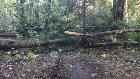Gatineau Park closed as NCC deals with tornado damage