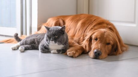 Animal protection bill proceeds despite concerns it gives SPCA too much power