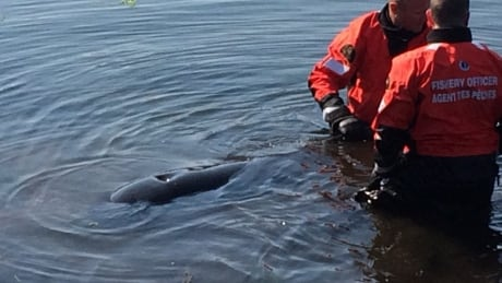 Pilot whale near North Lake in 'poor health,' had to be euthanized