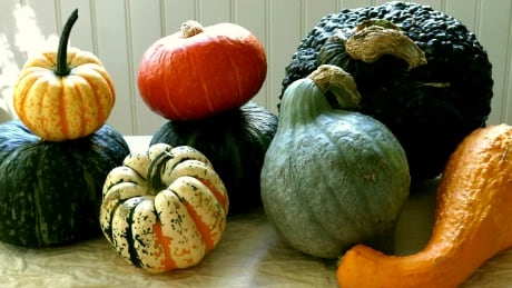 Enormous winter squash become pies, salads and pockets of yummy