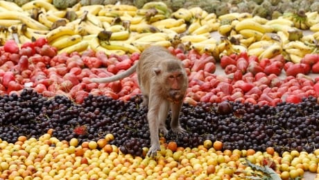 Plants colour their fruits to flag down the right animals