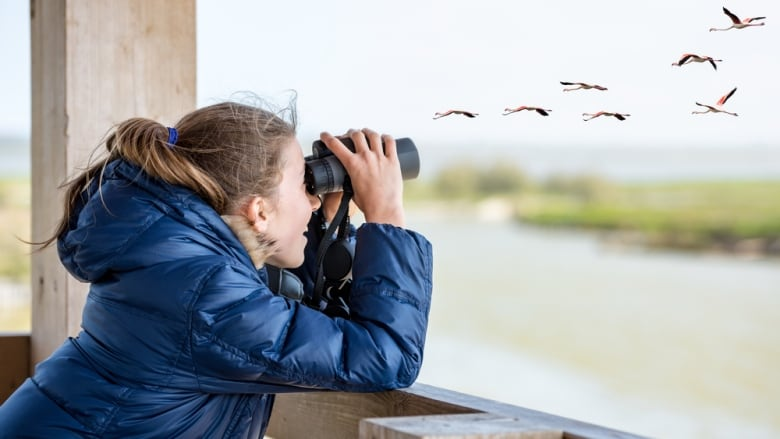 Getting started in birdwatching