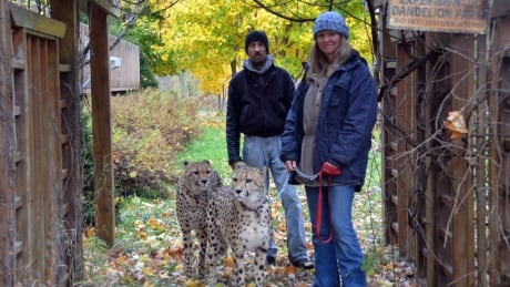 B.C. man who wanted to create a cheetah reserve in the Kootenays has petition denied