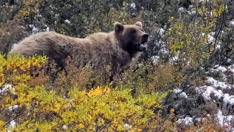 Alaska hunter fighting for life after bear he shot lands on him