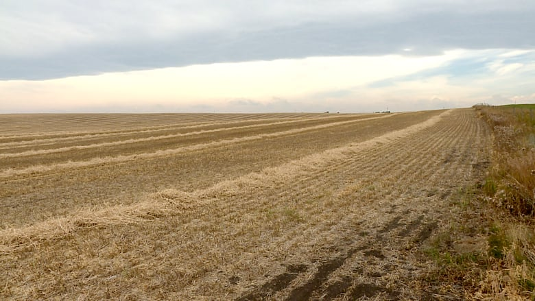 2019 a 'disastrous' year for crop farmers in Alberta