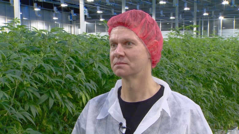 Cam Battley Chief Corporate Officer Of Aurora Cannabis Led Cbc News On A Tour Of The Company S