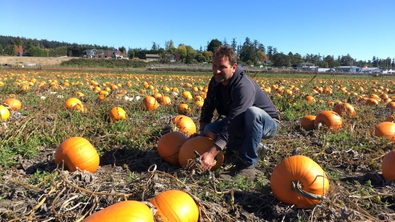 A Spooky Statistic Most Edible Pumpkins End Up In The Trash Cbc News