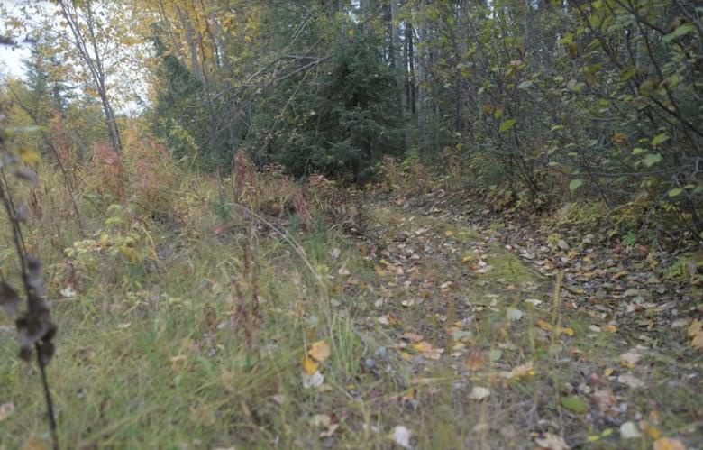 Mysterious killing of Manitoba teen Kerrie Ann Brown