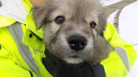 puppy st albert