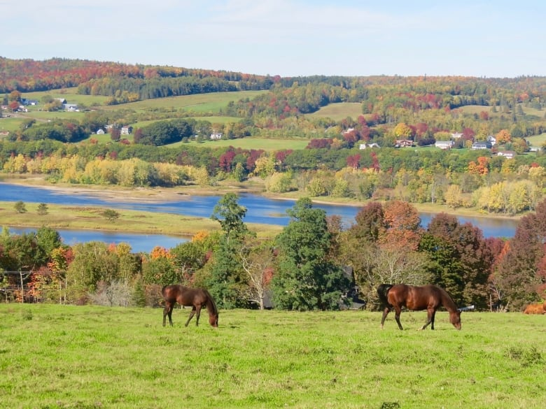 10 stunning fall photos from CBC NB Shift listeners