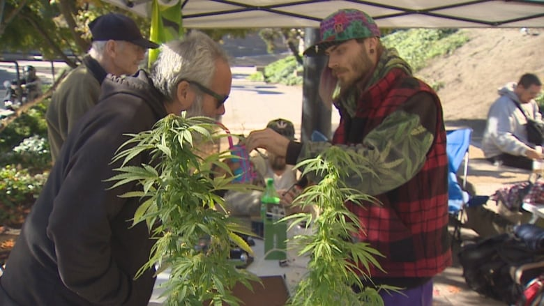 A 'dark day for Canada,' say anti-pot activists