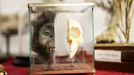 monkey skulls snakeskin boots and bear bile morbid items fill heathrow s dead shed