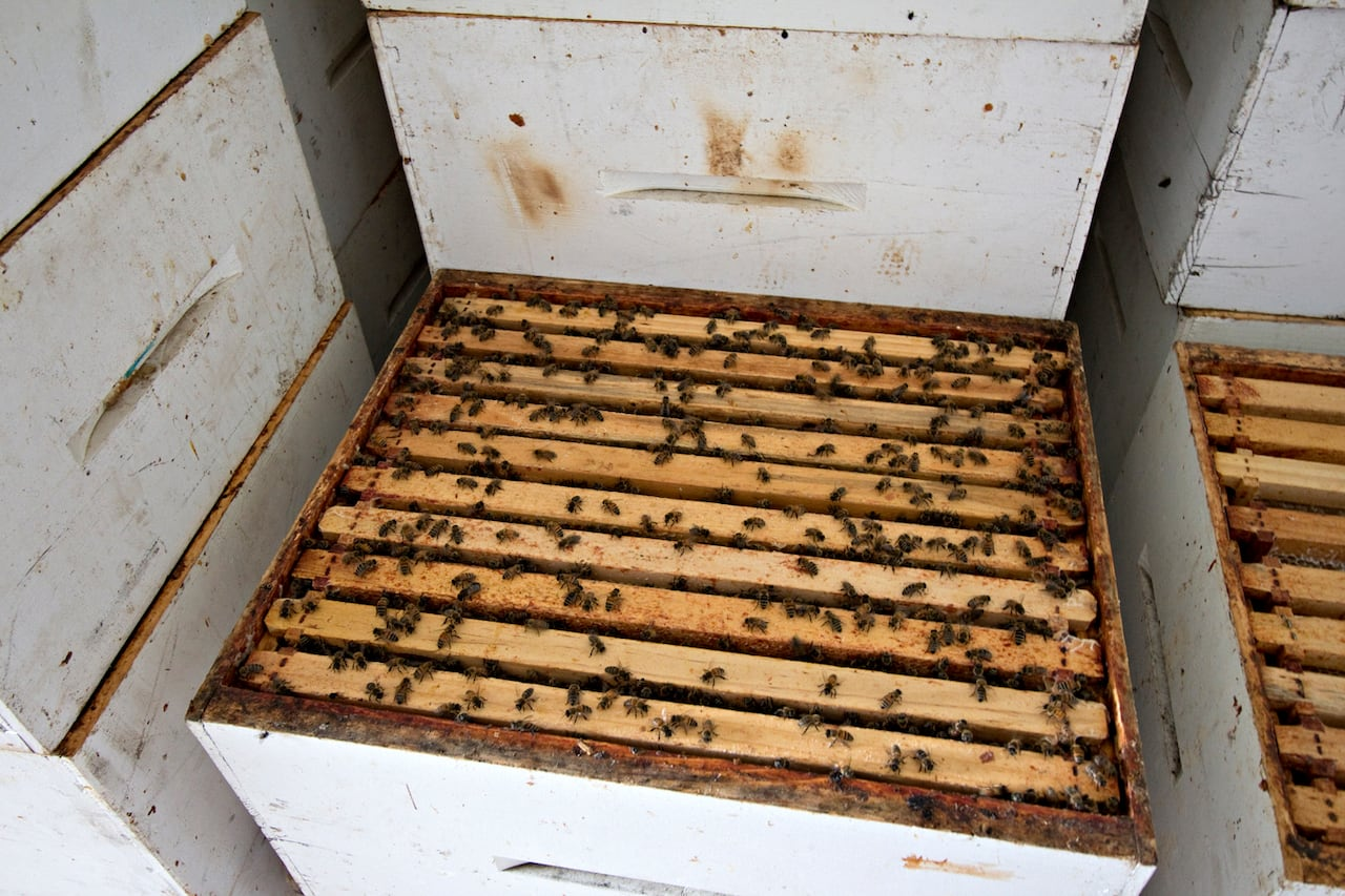 It's good to 'bee' here: Saskatchewan's honey business