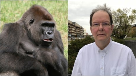 meet cardiologist bill devlin the ape crusader