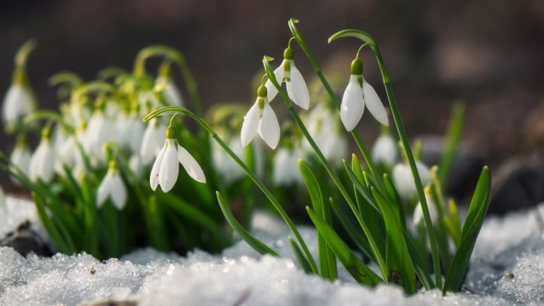 It S Time To Plant Your Spring Bulbs A Pro S Advice For Ensuring