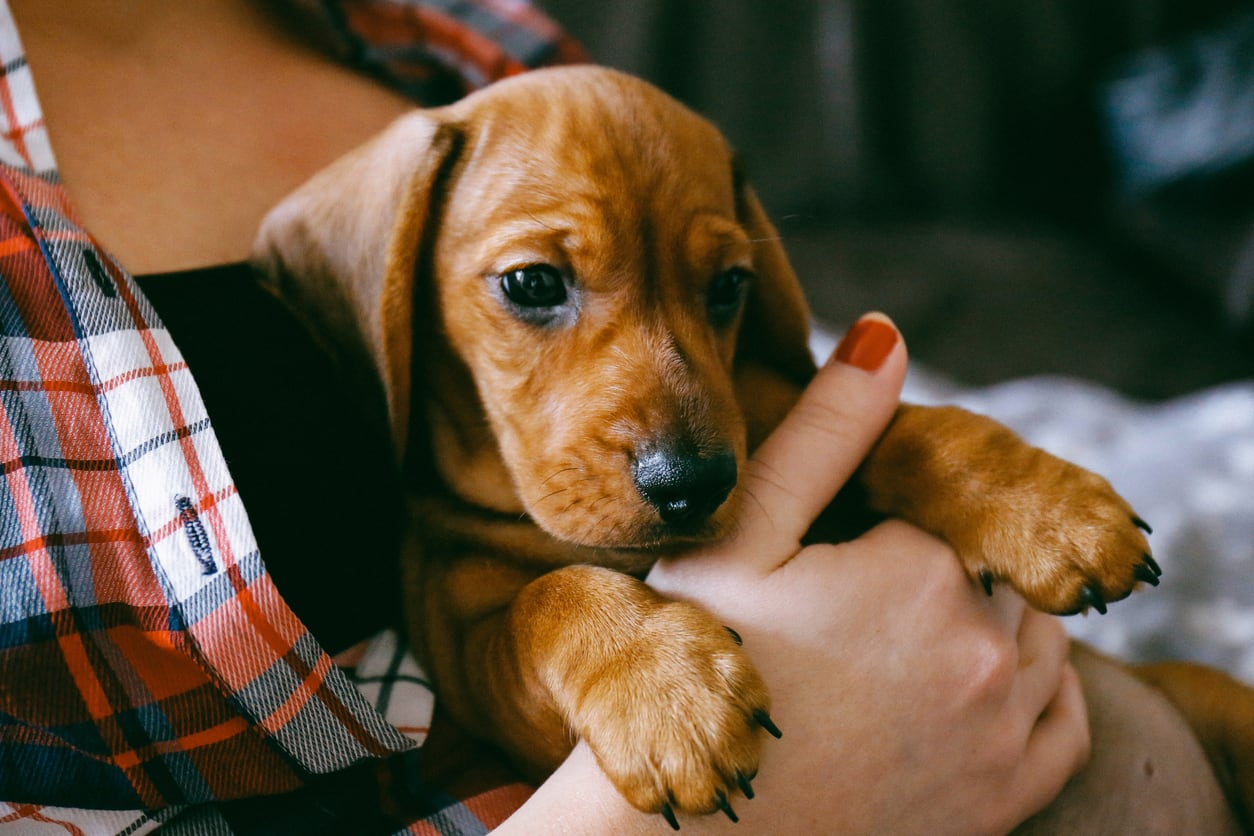 Phenomenal Got A New Puppy Heres The Perfect Shopping List To Get You Beutiful Home Inspiration Xortanetmahrainfo