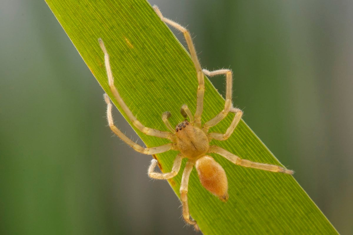 Spider Scare Sends Federal Government Workers Home U2014 Twice | CBC News