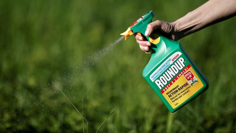 'Troubling allegations' prompt Health Canada review of studies used to approve popular weed-killer