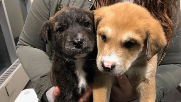 Puppies rescued from freezing temperatures in Regina's warehouse district | CBC News